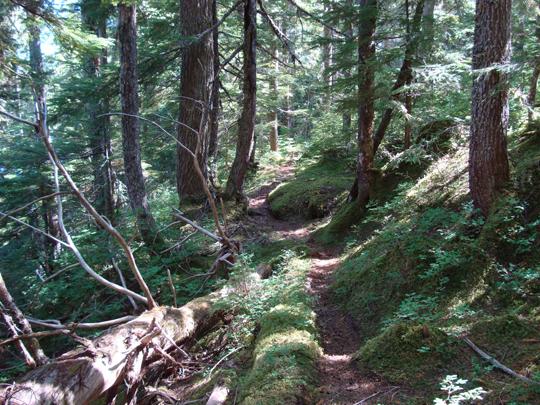 Mountain Hemlock trees and forest floor