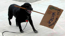 dog_protests